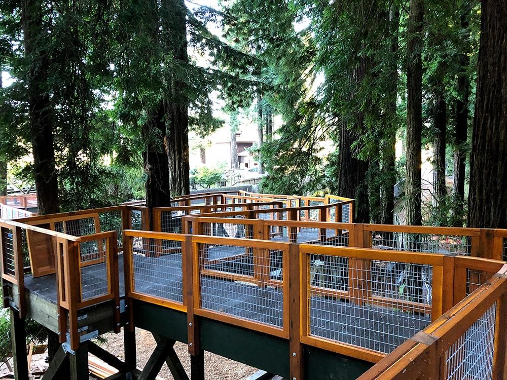 Redwood Sky Walk at Sequoia Park Zoo