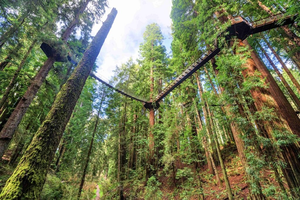 redwood sky walk platforms