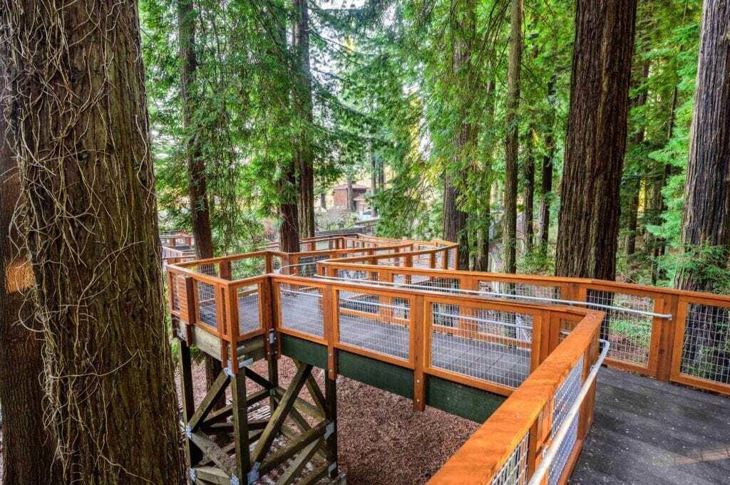 ascent ramp of the redwood sky walk