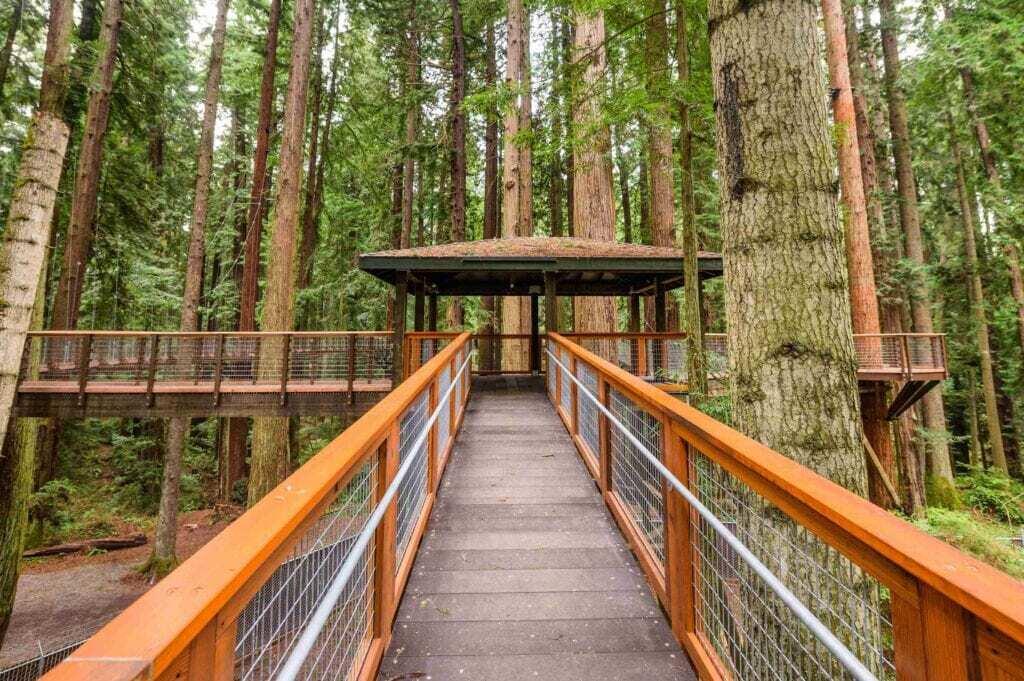 redwood sky walk launch deck