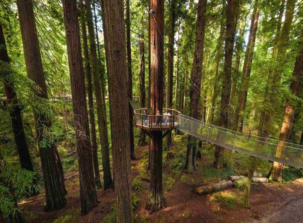 redwood sky walk platform