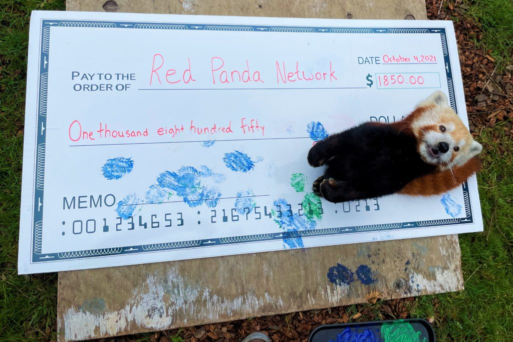 A red panda signs a check to donate to the Red Panda Network.