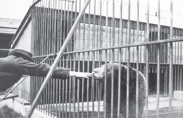 historical photo of a man reaching his hand into bear's cage at sequoia park zoo